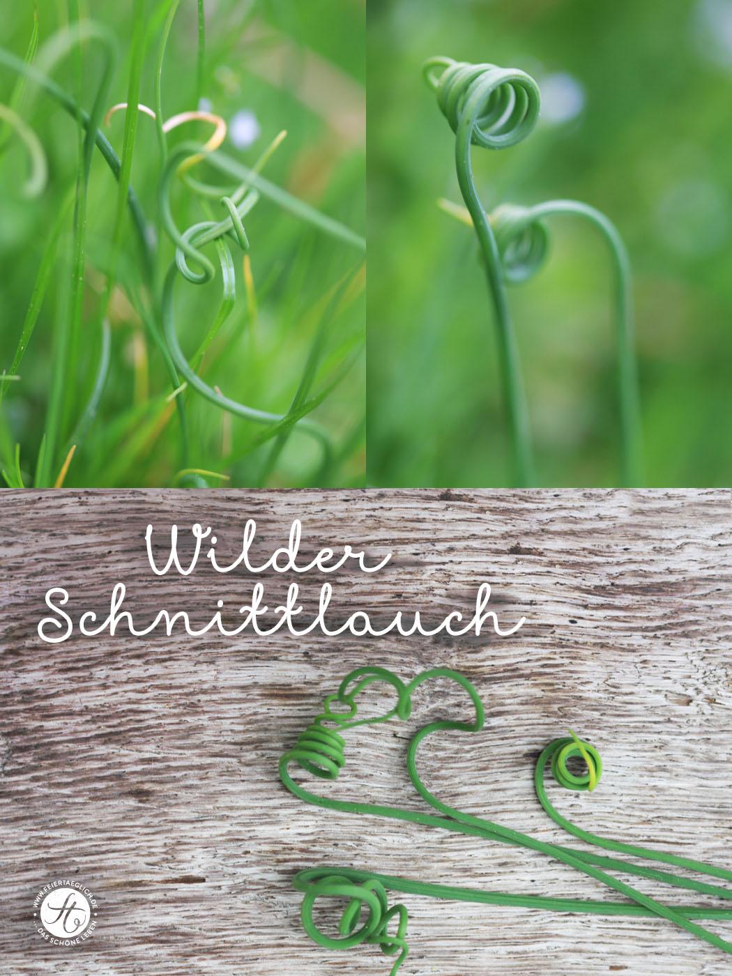 wildkraeuter_schnittlauch