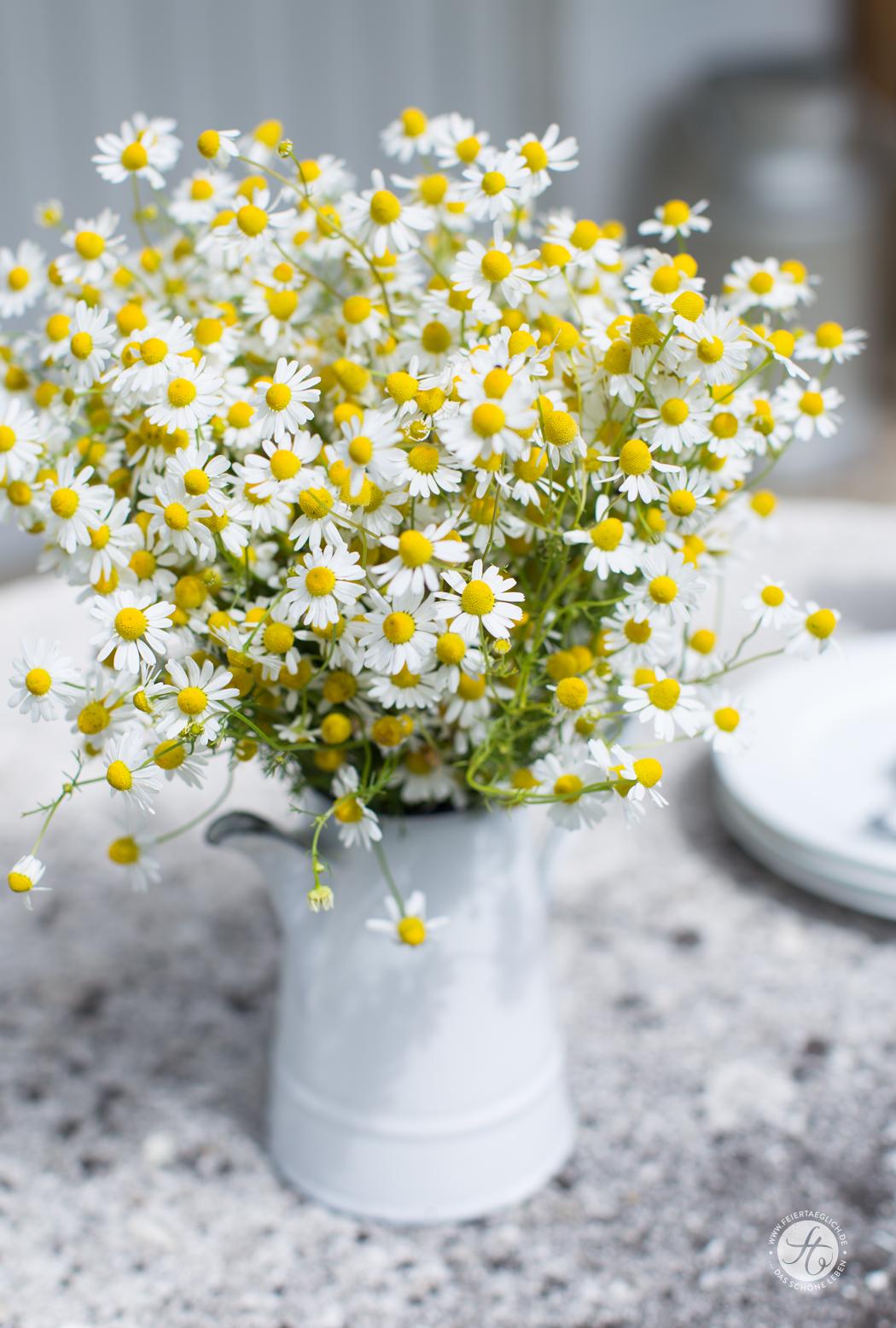 Kamille Strauss, wunderschöne Wiesenblumen im Sommer
