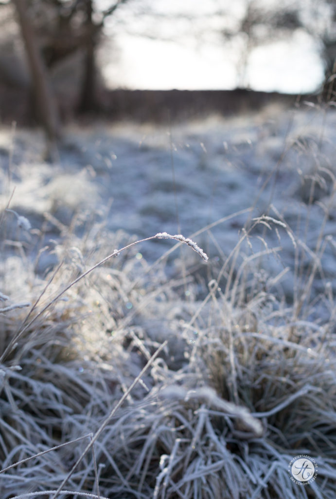 Zauberhafter Frost, Landschaft,