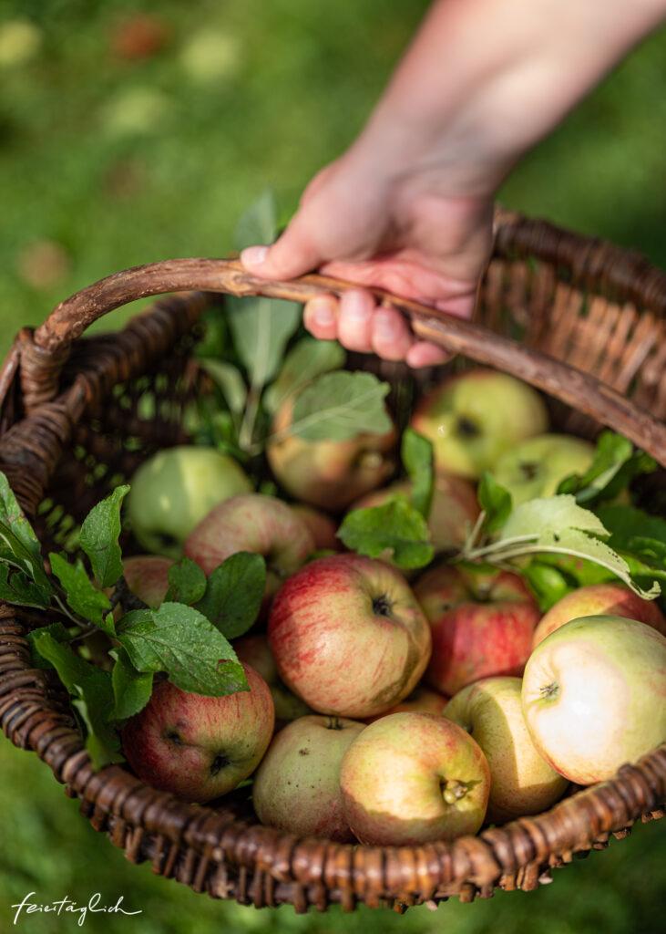 Schneller Apfelkuchen, Apfelernte